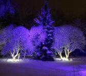 osvetljavanje_niskog_drveca_i_zbunja